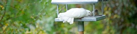 Diverse materialer og produkter til at indrette din have