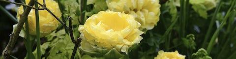 Blomsterløg og frø til plantning i haven